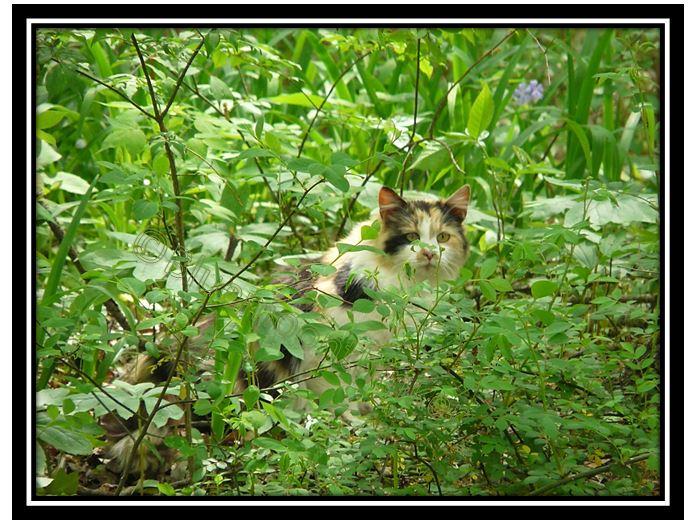 Feline of the Forest.JPG